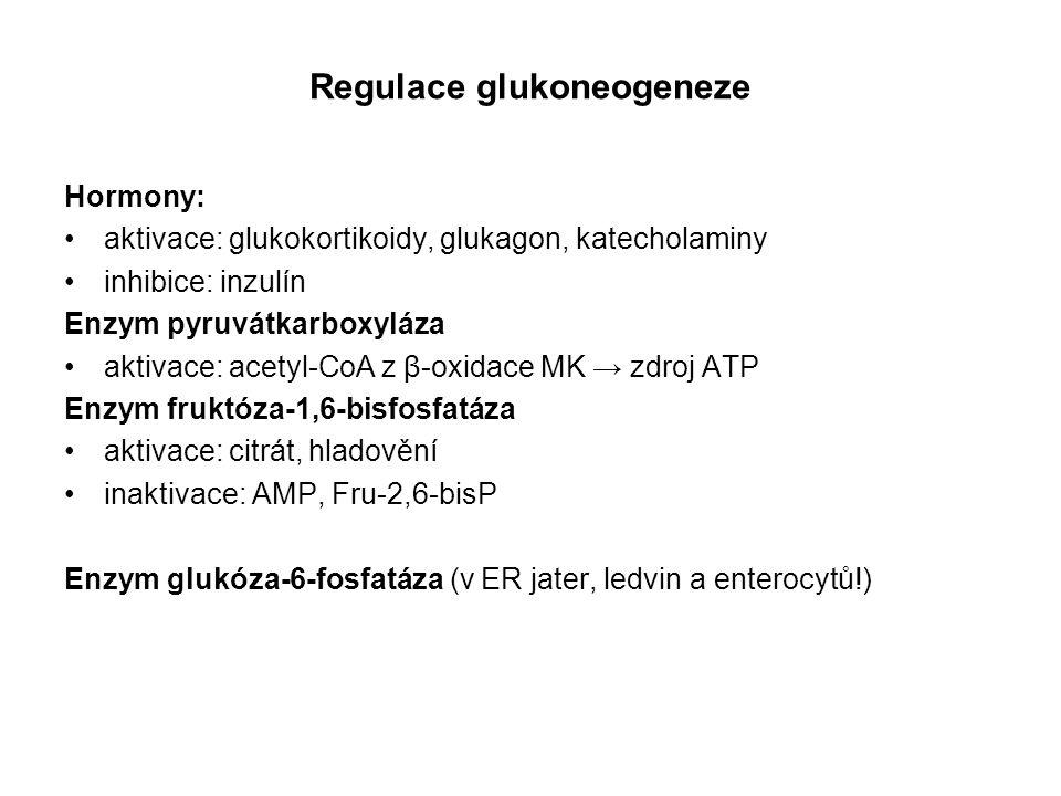 Regulace glukoneogeneze Hormony: aktivace: glukokortikoidy, glukagon, katecholaminy inhibice: inzulín Enzym pyruvátkarboxyláza aktivace: acetyl-CoA z