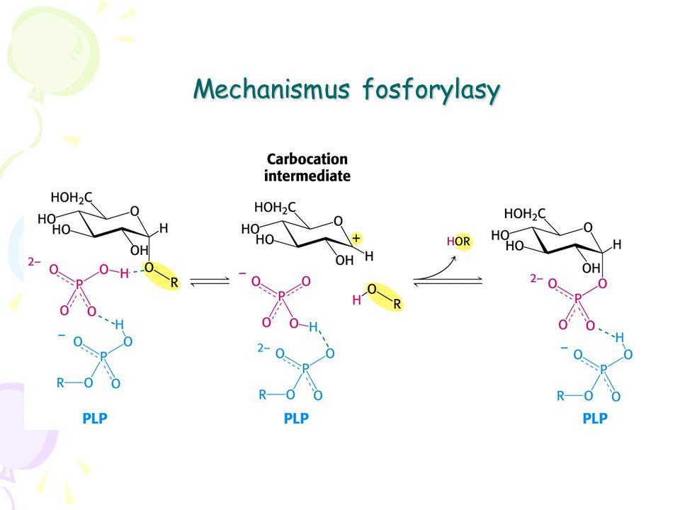 Mechanismus fosforylasy