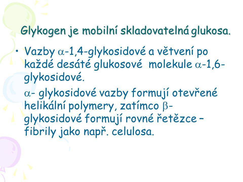 Glykogen je mobilní skladovatelná glukosa. Vazby  -1,4-glykosidové a větvení po každé desáté glukosové molekule  -1,6- glykosidové.  - glykosidové