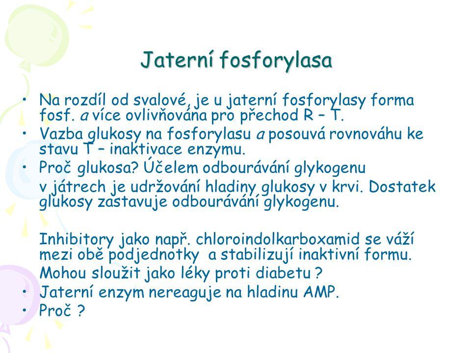 Jaterní fosforylasa Na rozdíl od svalové, je u jaterní fosforylasy forma fosf. a více ovlivňována pro přechod R – T. Vazba glukosy na fosforylasu a po