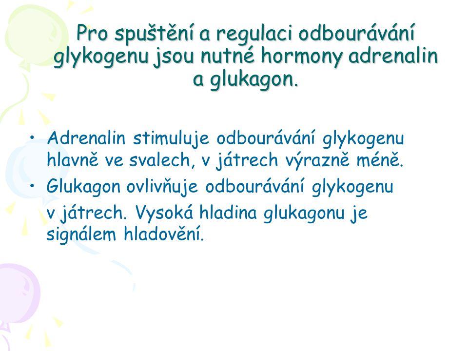Pro spuštění a regulaci odbourávání glykogenu jsou nutné hormony adrenalin a glukagon. Adrenalin stimuluje odbourávání glykogenu hlavně ve svalech, v