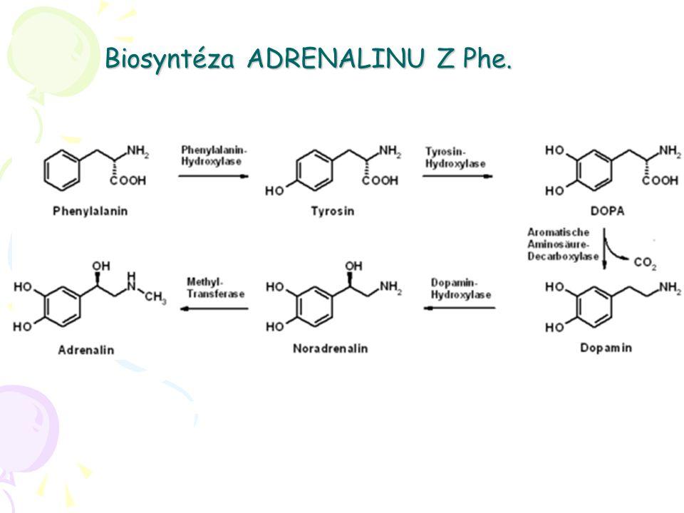 Biosyntéza ADRENALINU Z Phe.
