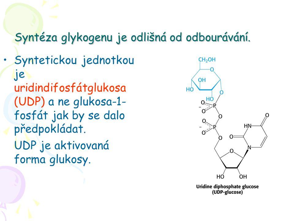 Syntéza glykogenu je odlišná od odbourávání. Syntetickou jednotkou je uridindifosfátglukosa (UDP) a ne glukosa-1- fosfát jak by se dalo předpokládat.