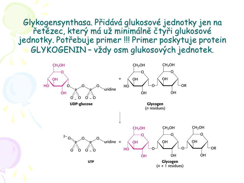 Glykogensynthasa. Přidává glukosové jednotky jen na řetězec, který má už minimálně čtyři glukosové jednotky. Potřebuje primer !!! Primer poskytuje pro