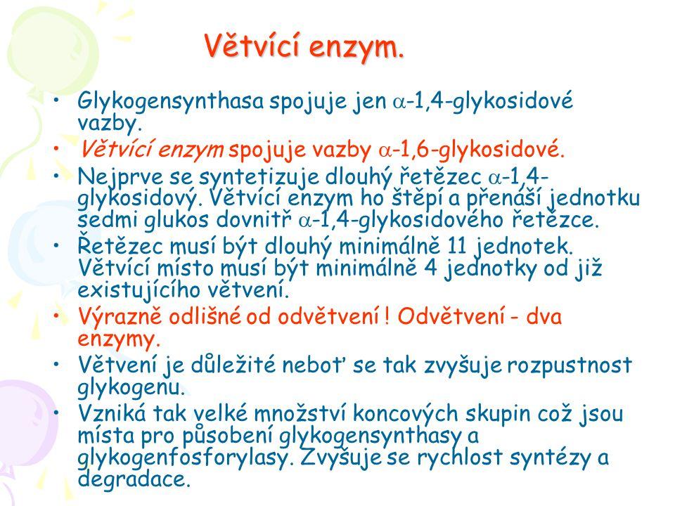 Větvící enzym. Glykogensynthasa spojuje jen  -1,4-glykosidové vazby. Větvící enzym spojuje vazby  -1,6-glykosidové. Nejprve se syntetizuje dlouhý ře