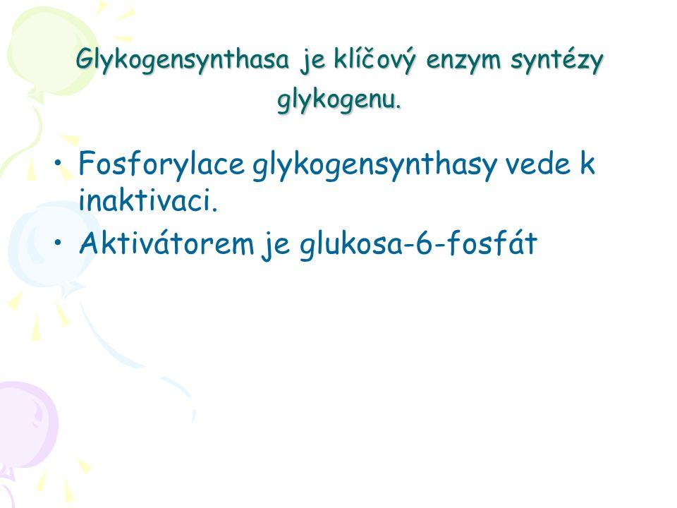 Glykogensynthasa je klíčový enzym syntézy glykogenu. Fosforylace glykogensynthasy vede k inaktivaci. Aktivátorem je glukosa-6-fosfát