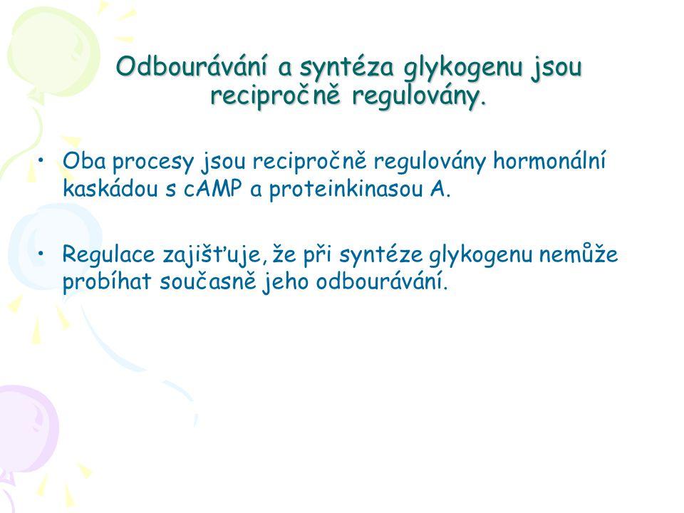 Odbourávání a syntéza glykogenu jsou recipročně regulovány. Oba procesy jsou recipročně regulovány hormonální kaskádou s cAMP a proteinkinasou A. Regu