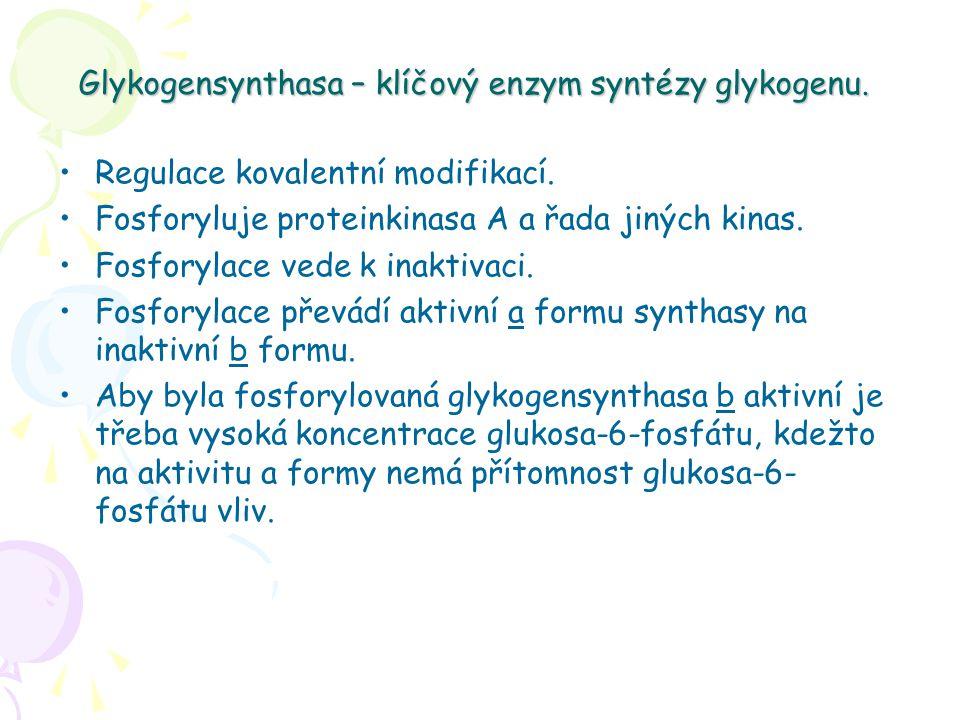 Glykogensynthasa – klíčový enzym syntézy glykogenu. Regulace kovalentní modifikací. Fosforyluje proteinkinasa A a řada jiných kinas. Fosforylace vede