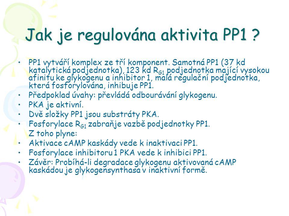 Jak je regulována aktivita PP1 ? PP1 vytváří komplex ze tří komponent. Samotná PP1 (37 kd katalytická podjednotka), 123 kd R G1 podjednotka mající vys