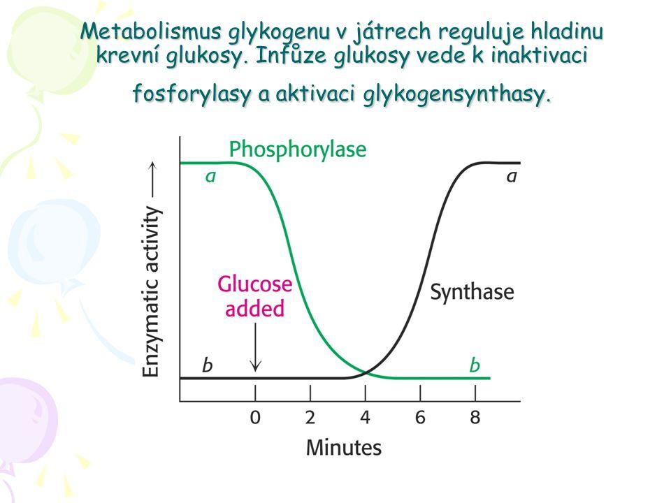 Metabolismus glykogenu v játrech reguluje hladinu krevní glukosy.