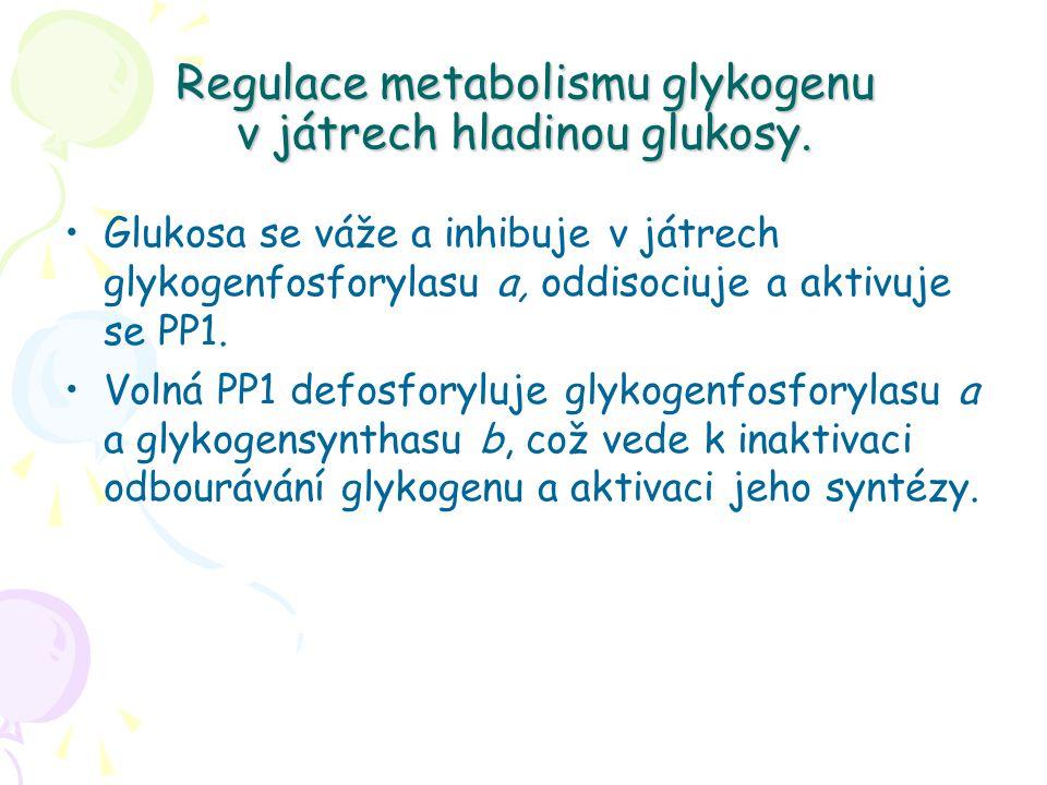 Regulace metabolismu glykogenu v játrech hladinou glukosy. Glukosa se váže a inhibuje v játrech glykogenfosforylasu a, oddisociuje a aktivuje se PP1.