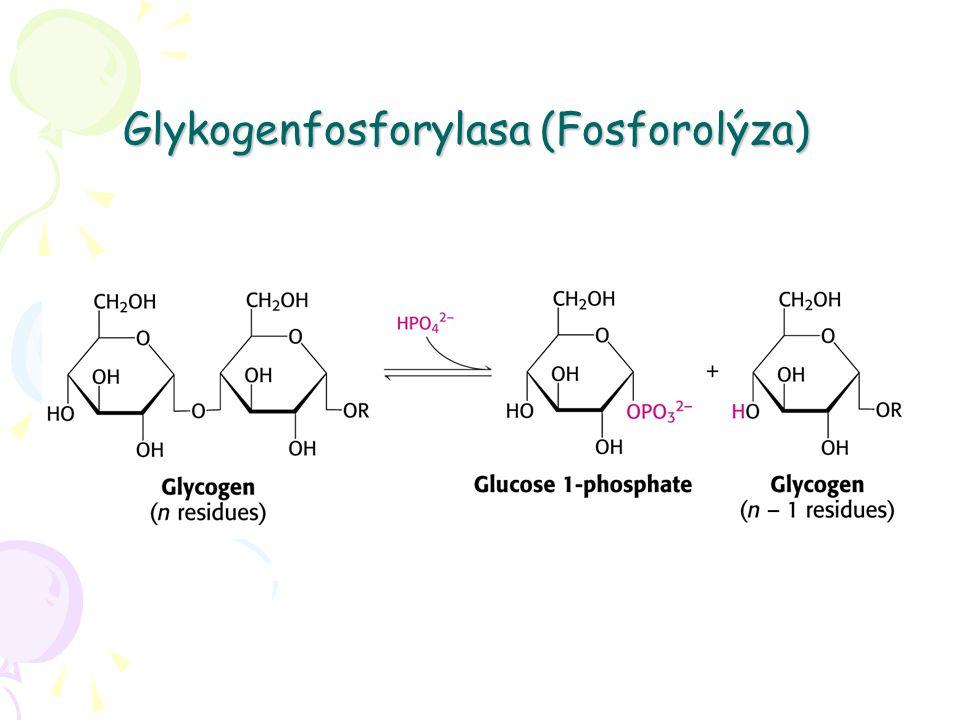 Glykogenfosforylasa (Fosforolýza)