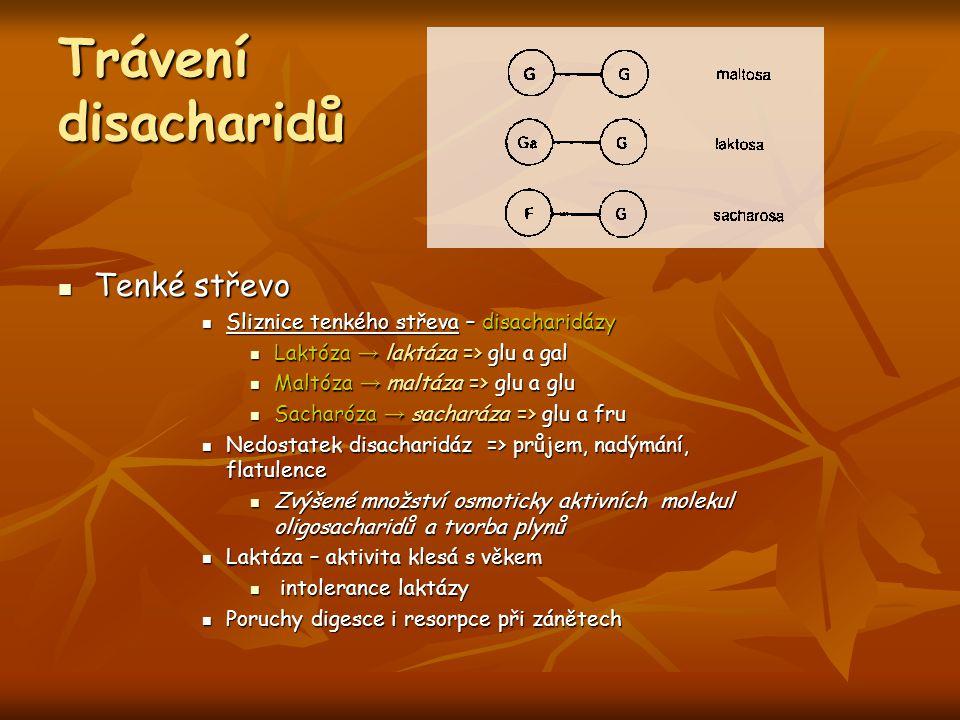 Trávení disacharidů Tenké střevo Tenké střevo Sliznice tenkého střeva – disacharidázy Sliznice tenkého střeva – disacharidázy Laktóza → laktáza => glu