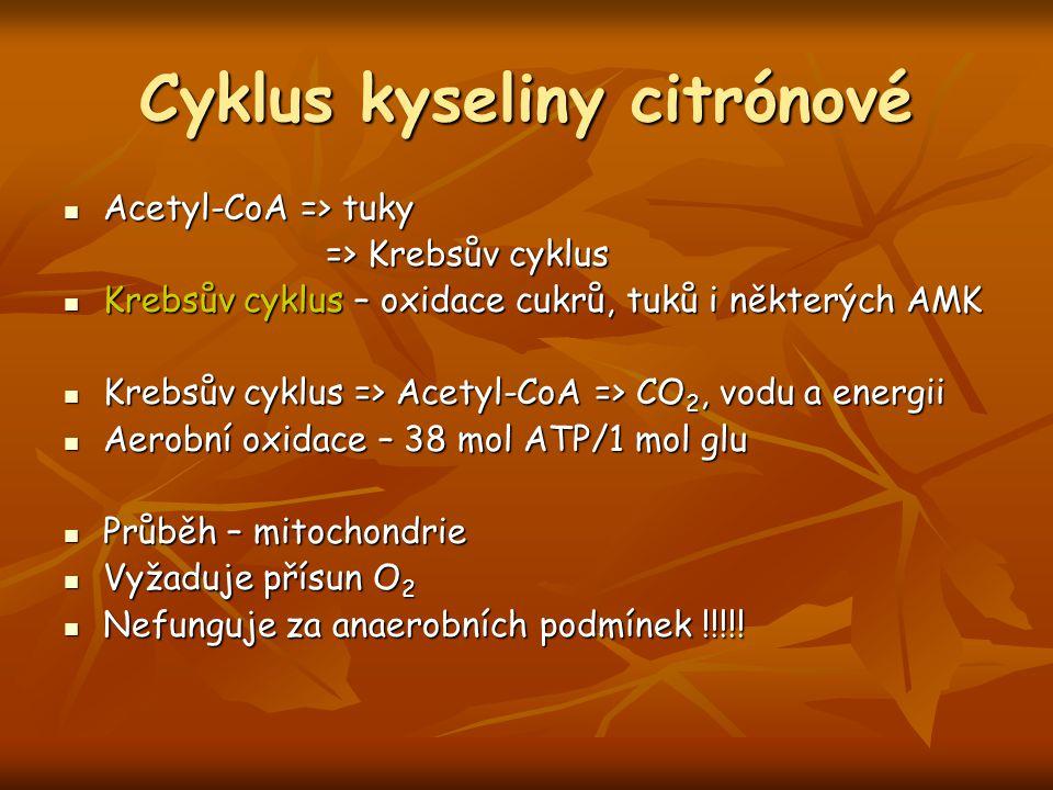 Cyklus kyseliny citrónové Acetyl-CoA => tuky Acetyl-CoA => tuky => Krebsův cyklus => Krebsův cyklus Krebsův cyklus – oxidace cukrů, tuků i některých A