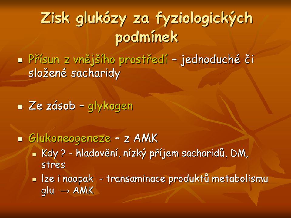 Zisk glukózy za fyziologických podmínek Přísun z vnějšího prostředí – jednoduché či složené sacharidy Přísun z vnějšího prostředí – jednoduché či slož
