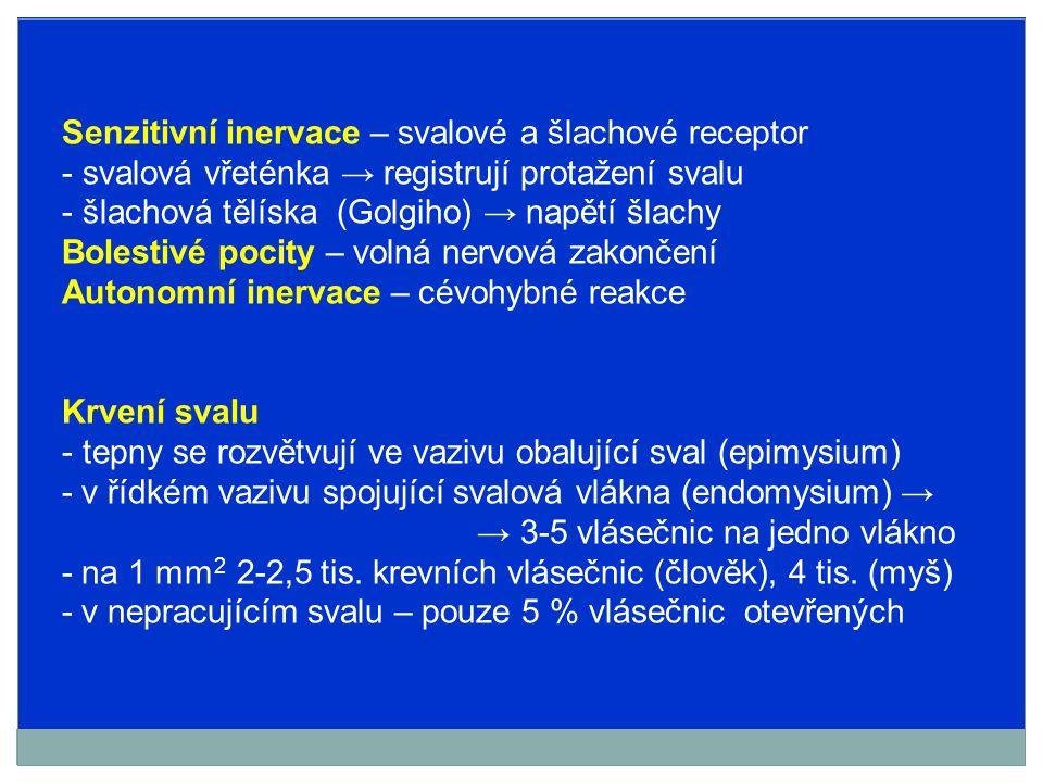 Senzitivní inervace – svalové a šlachové receptor - svalová vřeténka → registrují protažení svalu - šlachová tělíska (Golgiho) → napětí šlachy Bolesti