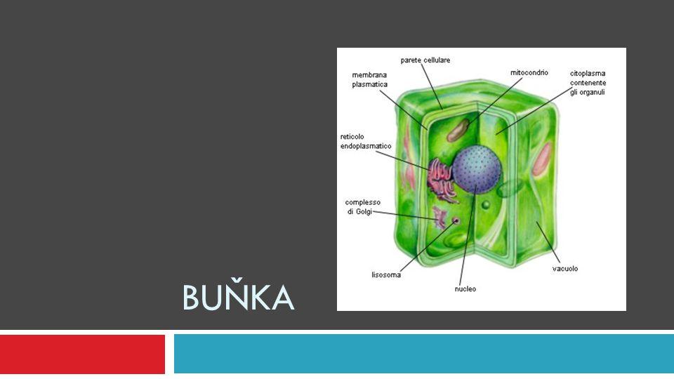 Buňka  buňka (celulla) – základní organizační (stavební (strukturní) a funkční) jednotka živých soustav  cytologie – věda zabývající se výzkumem buněk