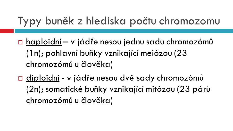 Typy buněk z hlediska počtu chromozomu  haploidní – v jádře nesou jednu sadu chromozómů (1n); pohlavní buňky vznikající meiózou (23 chromozómů u člov