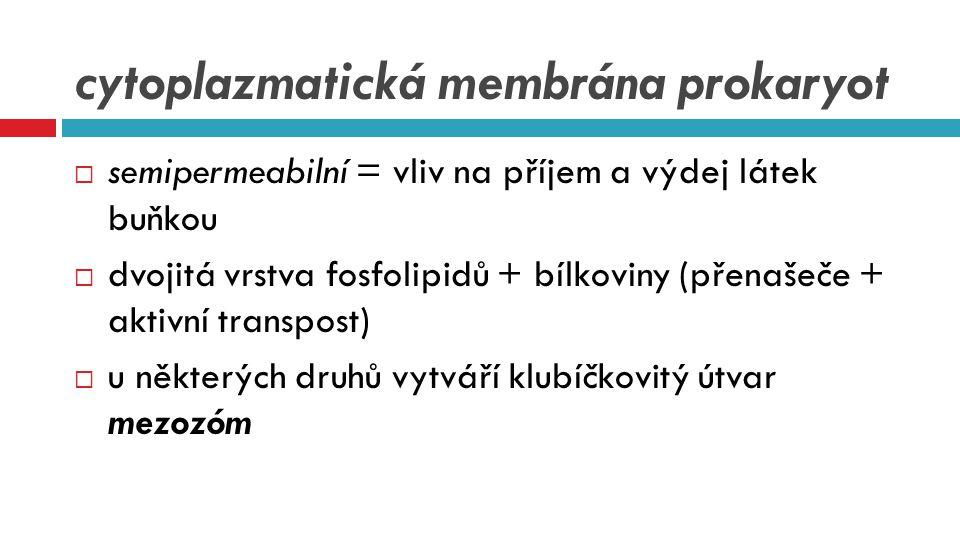 cytoplazmatická membrána prokaryot  semipermeabilní = vliv na příjem a výdej látek buňkou  dvojitá vrstva fosfolipidů + bílkoviny (přenašeče + aktiv
