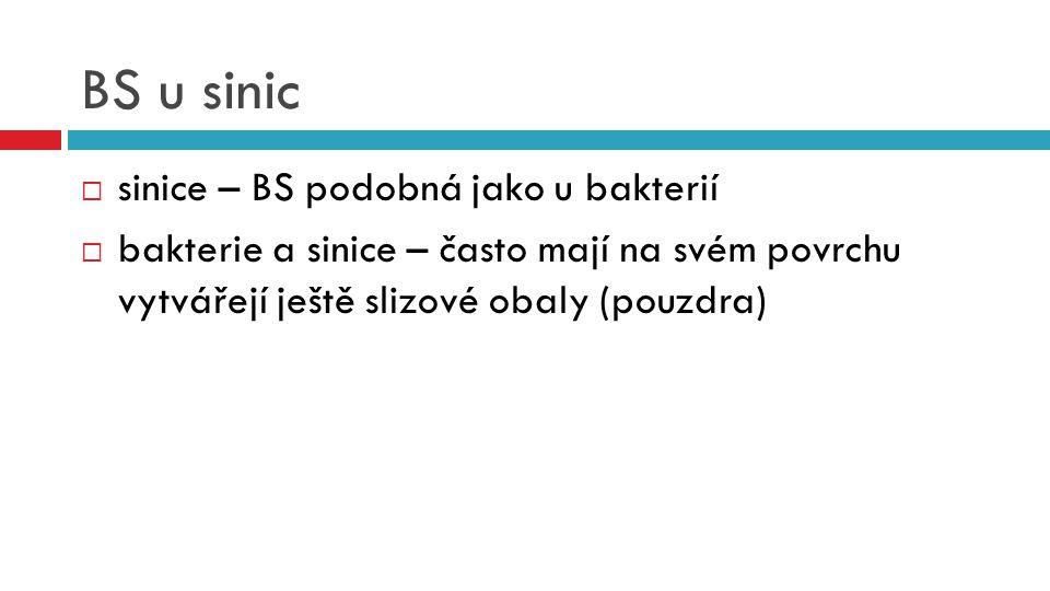 BS u sinic  sinice – BS podobná jako u bakterií  bakterie a sinice – často mají na svém povrchu vytvářejí ještě slizové obaly (pouzdra)