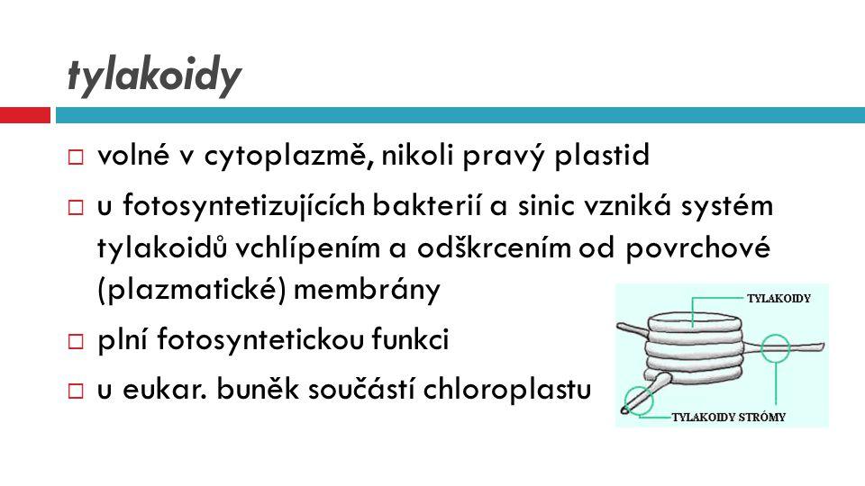 tylakoidy  volné v cytoplazmě, nikoli pravý plastid  u fotosyntetizujících bakterií a sinic vzniká systém tylakoidů vchlípením a odškrcením od povrc