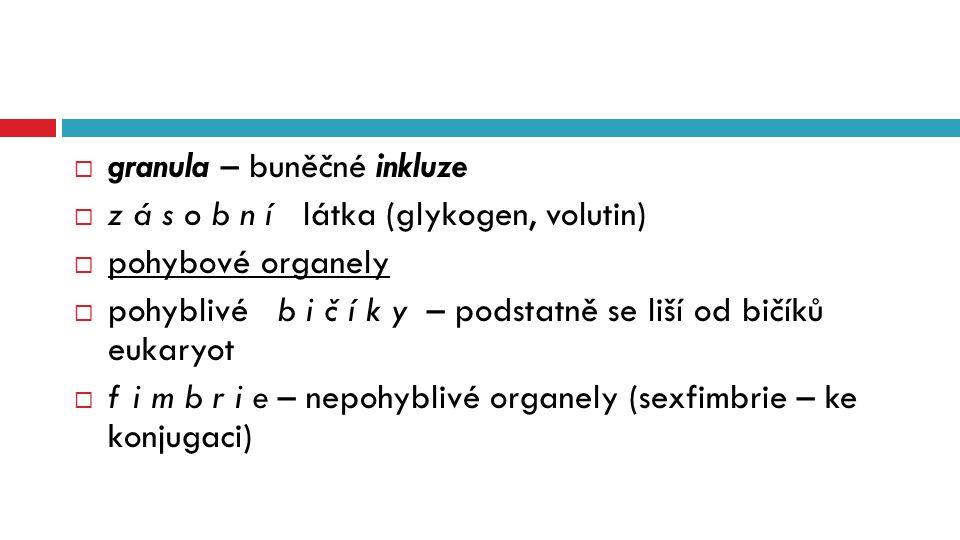  granula – buněčné inkluze  z á s o b n í látka (glykogen, volutin)  pohybové organely  pohyblivé b i č í k y – podstatně se liší od bičíků eukary