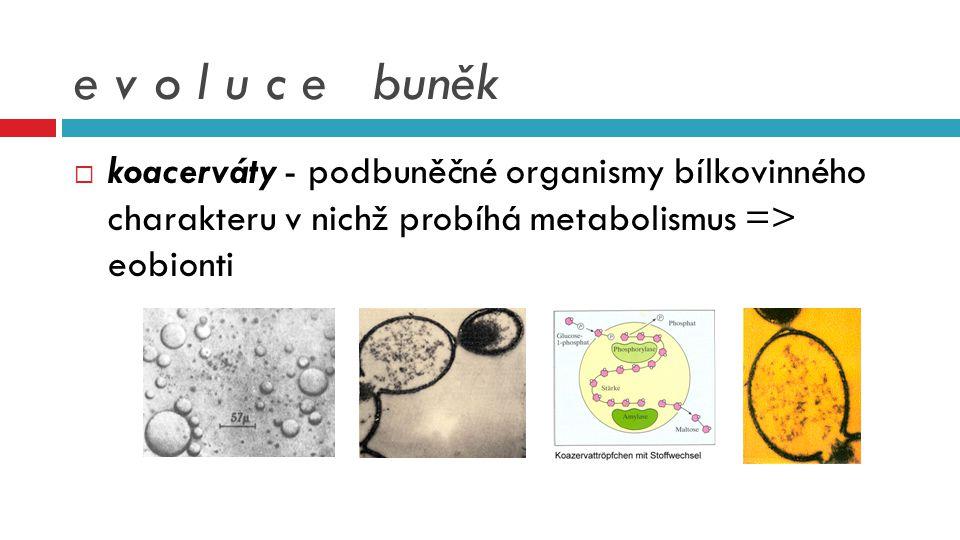 e v o l u c e buněk  koacerváty - podbuněčné organismy bílkovinného charakteru v nichž probíhá metabolismus => eobionti