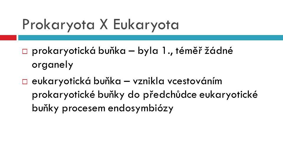 Prokaryota X Eukaryota  prokaryotická buňka – byla 1., téměř žádné organely  eukaryotická buňka – vznikla vcestováním prokaryotické buňky do předchů
