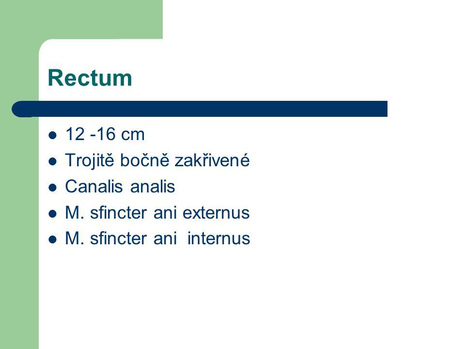 Rectum 12 -16 cm Trojitě bočně zakřivené Canalis analis M.