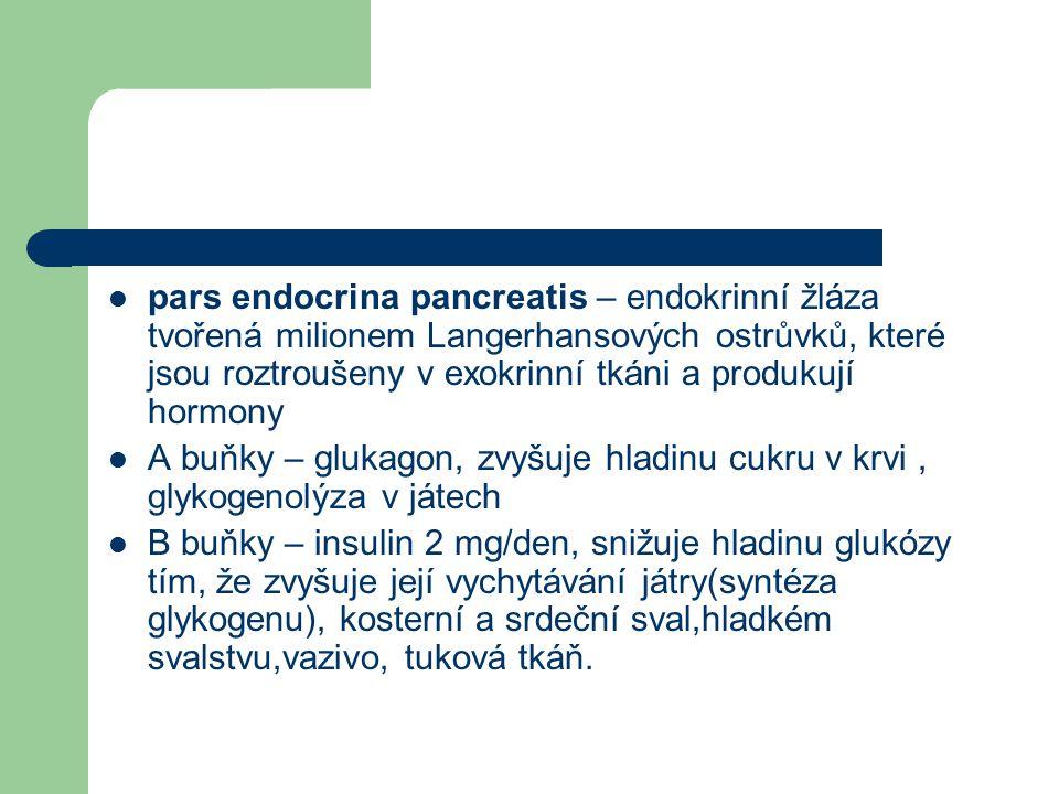 pars endocrina pancreatis – endokrinní žláza tvořená milionem Langerhansových ostrůvků, které jsou roztroušeny v exokrinní tkáni a produkují hormony A buňky – glukagon, zvyšuje hladinu cukru v krvi, glykogenolýza v játech B buňky – insulin 2 mg/den, snižuje hladinu glukózy tím, že zvyšuje její vychytávání játry(syntéza glykogenu), kosterní a srdeční sval,hladkém svalstvu,vazivo, tuková tkáň.