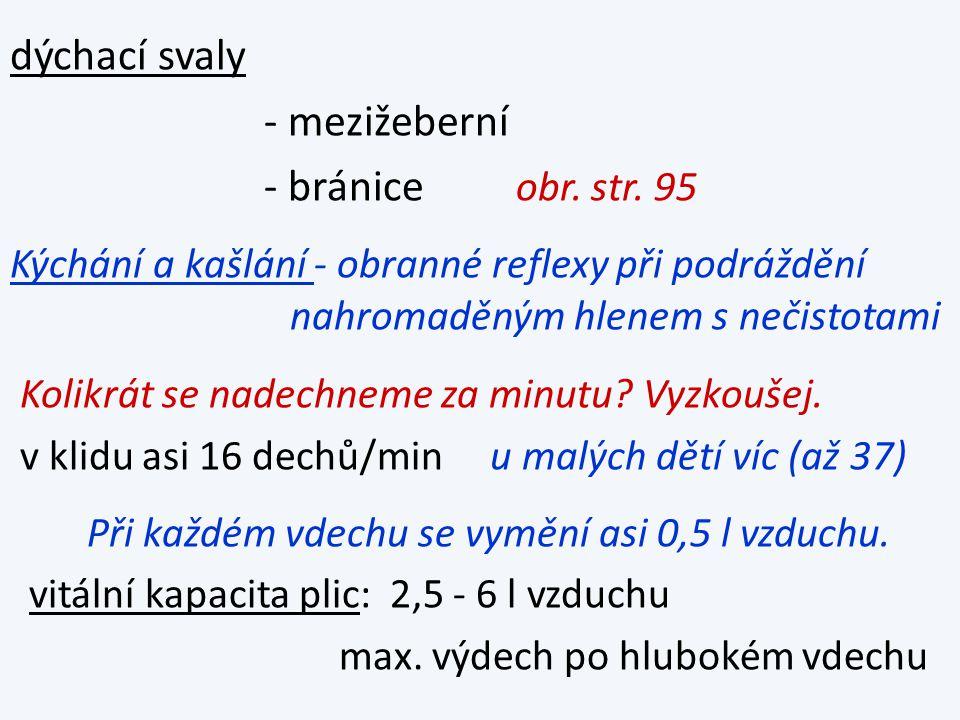 dýchací svaly - mezižeberní - bránice obr. str.