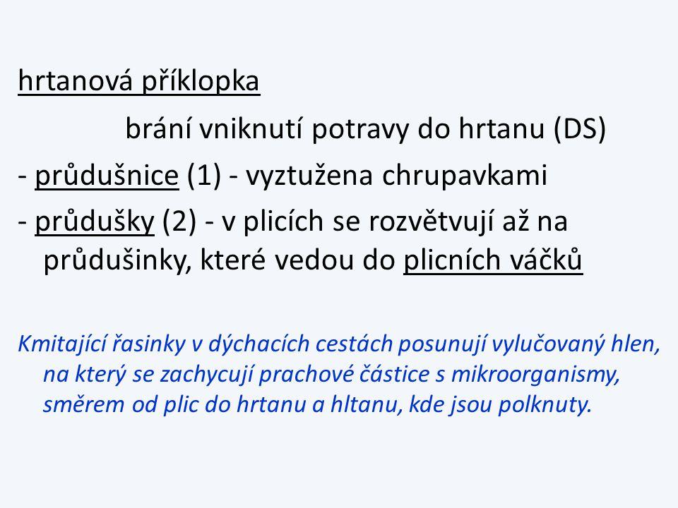 Stěna plicního váčku vytváří plicní sklípky: obr.str.