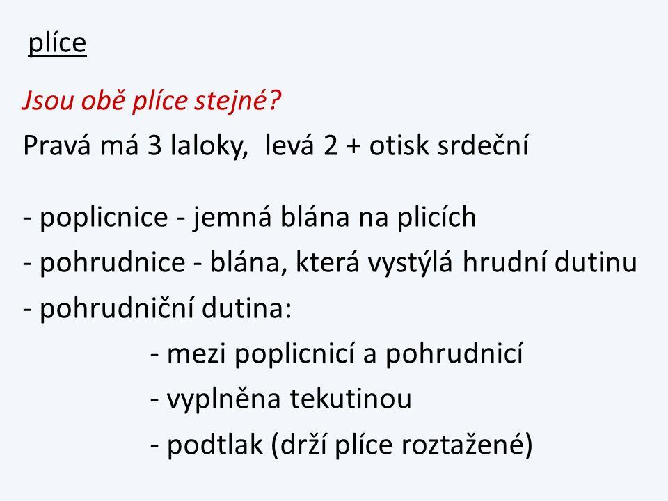 dýchací svaly - mezižeberní - bránice obr.str.