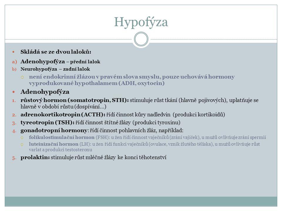 Hypofýza Skládá se ze dvou laloků: a) Adenohypofýza – přední lalok b) Neurohypofýza – zadní lalok  není endokrinní žlázou v pravém slova smyslu, pouze uchovává hormony vyprodukované hypothalamem (ADH, oxytocin) Adenohypofýza 1.