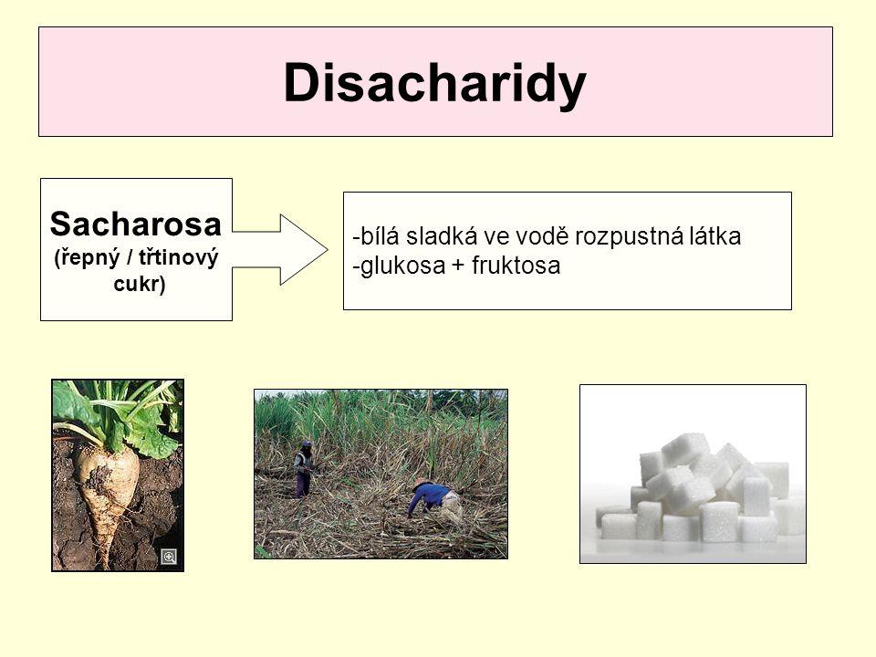 Disacharidy Sacharosa (řepný / třtinový cukr) -bílá sladká ve vodě rozpustná látka -glukosa + fruktosa