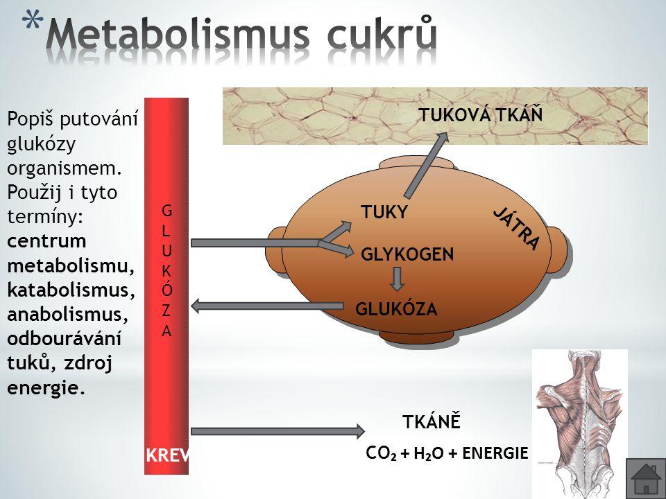TUKY GLYKOGEN GLUKÓZA TUKOVÁ TKÁŇ CO ₂ + H₂O + ENERGIE TKÁNĚ KREV GLUKÓZAGLUKÓZA JÁTRA Popiš putování glukózy organismem. Použij i tyto termíny: centr