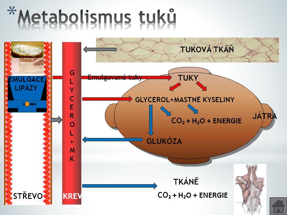 TUKY GLUKÓZA TUKOVÁ TKÁŇ CO ₂ + H₂O + ENERGIE TKÁNĚ KREV GLYCEROL+MKGLYCEROL+MK STŘEVO JÁTRA Glycerol + MK Emulgace Glycerol + MK Emulgace EMULGACE LI