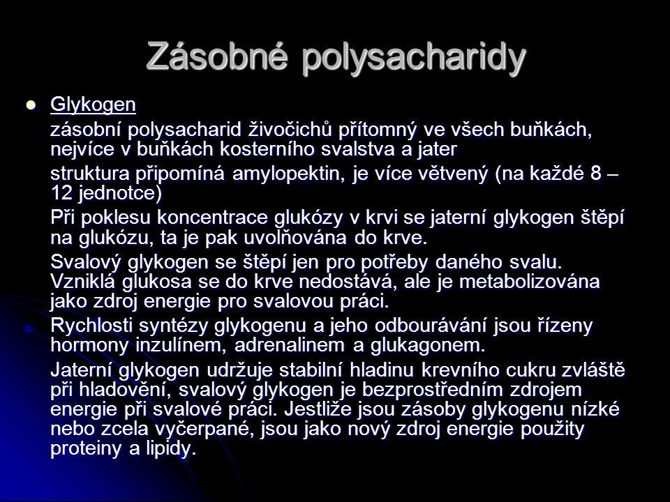 Zásobné polysacharidy Glykogen Glykogen zásobní polysacharid živočichů přítomný ve všech buňkách, nejvíce v buňkách kosterního svalstva a jater struktura připomíná amylopektin, je více větvený (na každé 8 – 12 jednotce) Při poklesu koncentrace glukózy v krvi se jaterní glykogen štěpí na glukózu, ta je pak uvolňována do krve.