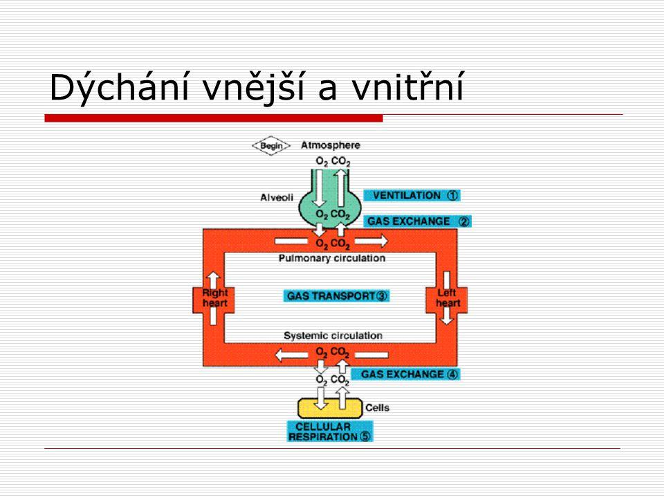 Vnější dýchání 4 hlavní procesy - plicní ventilace - distribuce vzduchu - difuze plynů - perfuze plic