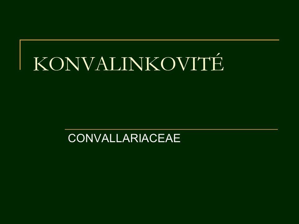 KONVALINKOVITÉ CONVALLARIACEAE