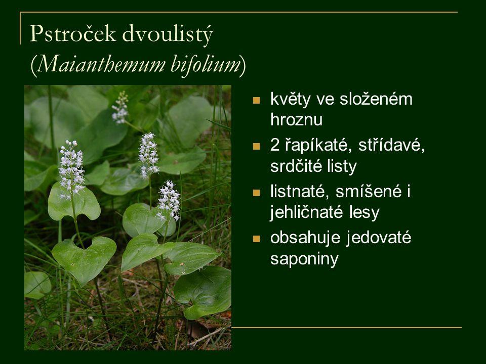 Pstroček dvoulistý (Maianthemum bifolium) květy ve složeném hroznu 2 řapíkaté, střídavé, srdčité listy listnaté, smíšené i jehličnaté lesy obsahuje jedovaté saponiny