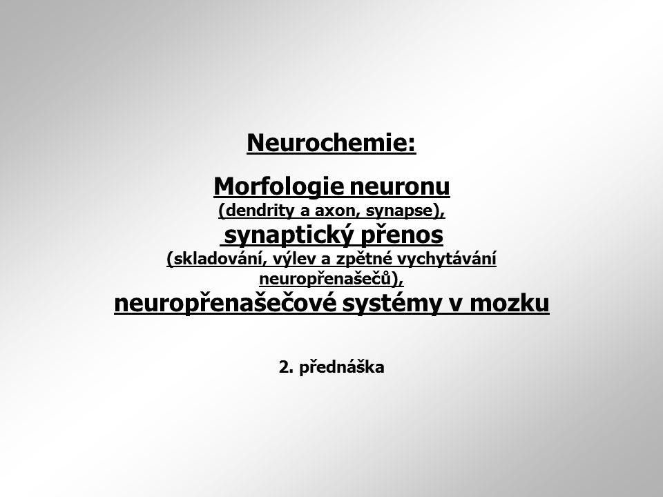 Neurochemie: Morfologie neuronu (dendrity a axon, synapse), synaptický přenos (skladování, výlev a zpětné vychytávání neuropřenašečů), neuropřenašečov