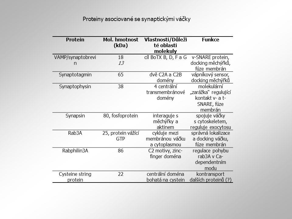 ProteinMol. hmotnost (kDa) Vlastnosti/Důleži té oblasti molekuly Funkce VAMP/synaptobrevi n 18 13 cíl BoTX B, D, F a Gv-SNARE protein, docking měchýřk