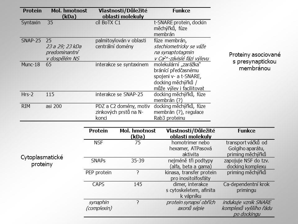 ProteinMol. hmotnost (kDa) Vlastnosti/Důležité oblasti molekuly Funkce Syntaxin 35cíl BoTX C1t-SNARE protein, dockin měchýřků, fúze membrán SNAP-2525