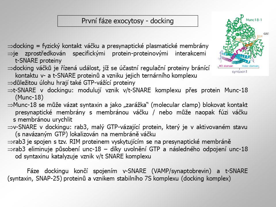  docking = fyzický kontakt váčku a presynaptické plasmatické membrány  je zprostředkován specifickými protein-proteinovými interakcemi mezi v- a t-S