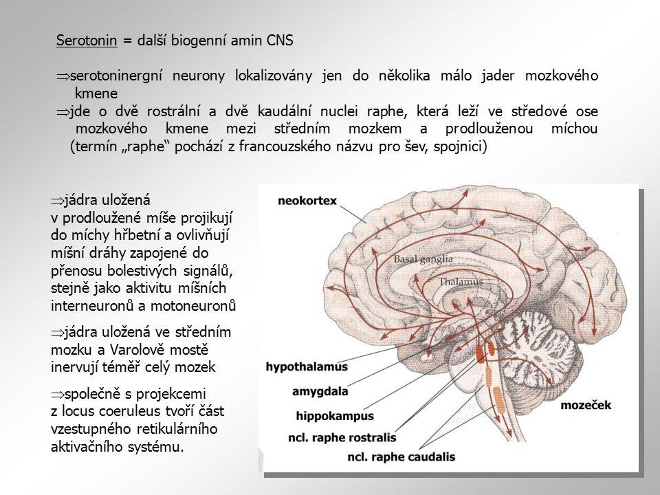 Serotonin = další biogenní amin CNS  serotoninergní neurony lokalizovány jen do několika málo jader mozkového kmene  jde o dvě rostrální a dvě kaudá