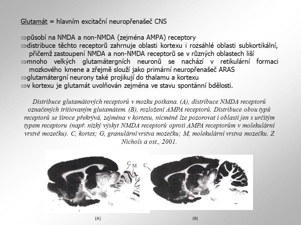 Glutamát = hlavním excitační neuropřenašeč CNS  působí na NMDA a non-NMDA (zejména AMPA) receptory  distribuce těchto receptorů zahrnuje oblasti kor