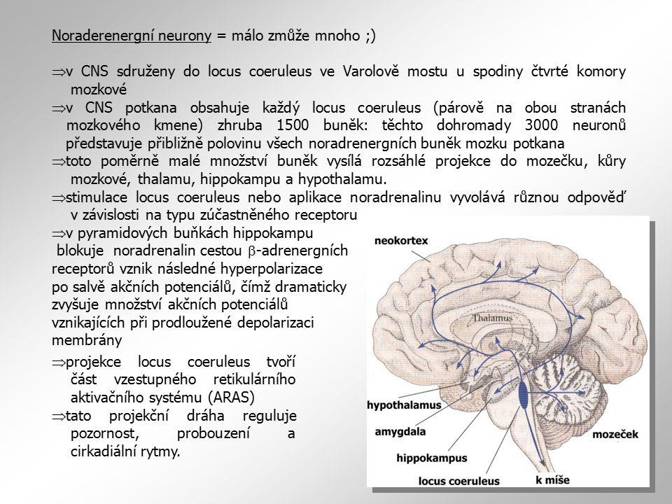 Noraderenergní neurony = málo zmůže mnoho ;)  v CNS sdruženy do locus coeruleus ve Varolově mostu u spodiny čtvrté komory mozkové  v CNS potkana obs