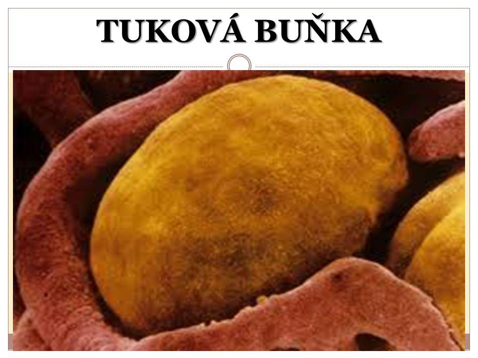 ZÍSKÁVÁNÍ TUKŮ Rostlinné tuky se získávají lisováním semen Extrakcí = vylouhováním organickým rozpouštědlem s nízkou teplotou varu Vytavováním živočišných tkání bohatých na tuky