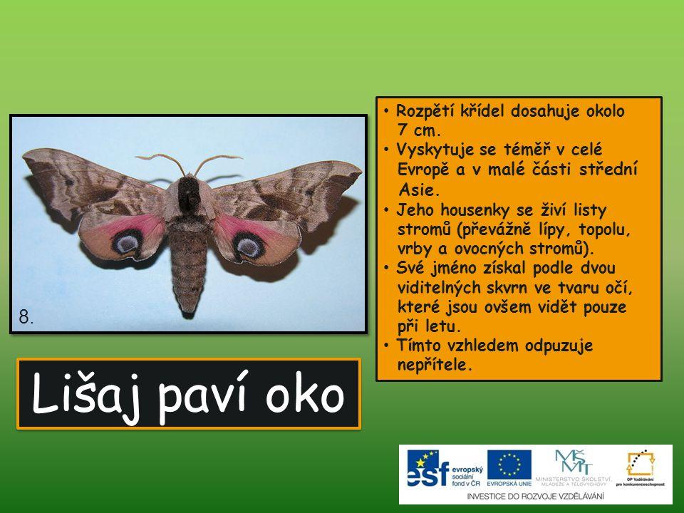 8. Lišaj paví oko Rozpětí křídel dosahuje okolo 7 cm. Vyskytuje se téměř v celé Evropě a v malé části střední Asie. Jeho housenky se živí listy stromů
